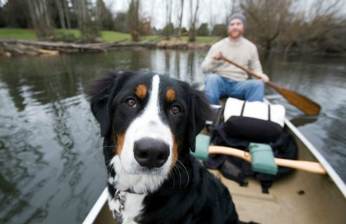 holistic veterinary care