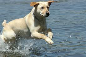 healty dog