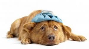 sick dog2