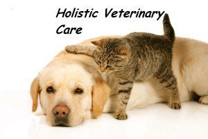 holistic vet care