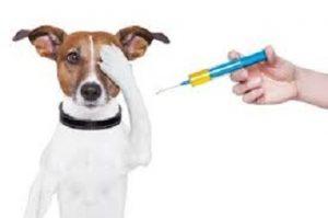 vaccine3